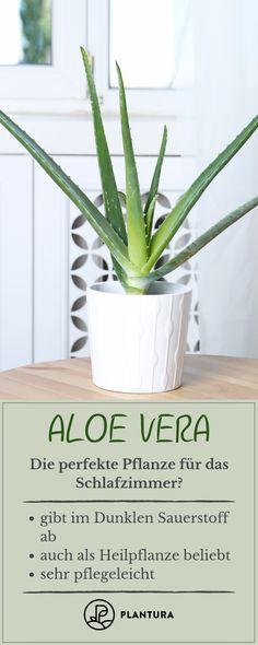 Die 9 besten Bilder von Pflanzen im Schlafzimmer   Interior plants ...