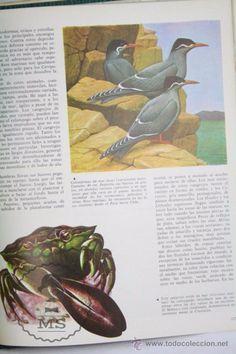 Libros de segunda mano: Libro Naturalia. Enciclopedia Ecológica Ciencias Naturales. Vol II. El Mar y Su Fauna - Codex, 1965 - Foto 3 - 50515282