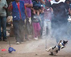 Petition - Ban eating of CAT MEAT in Peru!! PLEASE SIGN & SHARE! The killing…