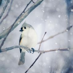 Winter Wall Art, Winter Photo, Winter Art, Bird Print, Woodland Animal... ($15) ❤ liked on Polyvore featuring home, home decor, wall art, backgrounds, pictures, winter, animals, birds, filler and paper wall art