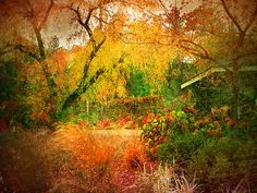 Ornamental Gardens in Summerland, British Columbia, Canada. Stuff To Do, Things To Do, Fine Art Prints, Framed Prints, Western Canada, Best Places To Travel, British Columbia, Rest, Country Roads