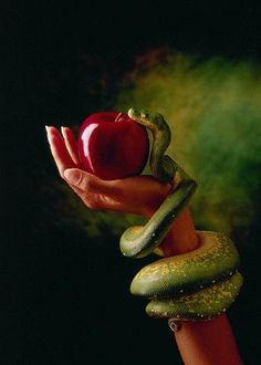 The Forbidden Fruit. Because of our inability to resist it, we are all doomed to die.