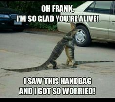 Purse roadkill humor