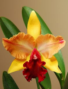 Blc Toshie's Magic | Flickr - Photo Sharing!