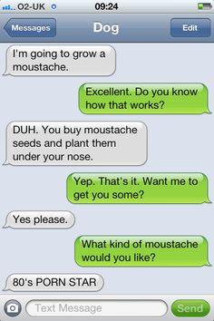moustache dog