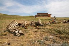 Vulture hide - a chance to see bearded vultures at Golden Gate Highlands National Park