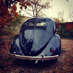 1952 split oval-3