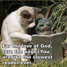 ..reading.