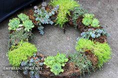 Make a succulent wreath: 9+ DIY Succulent Garden Ideas at empressofdirt.net