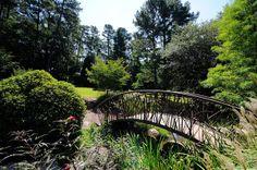 Beautiful summer day.  Photography by Bob Ayers  gardens.duke.edu