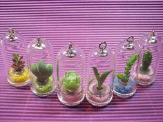 Pet Mini Plant