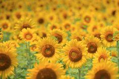 心奪われる光景に出会いたい。至極の【夏の絶景】3選 | キナリノ Flowers, Plants, Travel, Viajes, Destinations, Plant, Traveling, Trips, Royal Icing Flowers