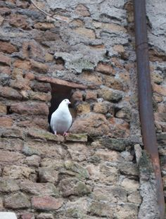 When Is Pentecost Sunday 2015?: A dove is perched in a wall outside the Basilica of St. Agnes Outside the Walls, Rome, Italy. The dove is the traditional Christian symbol for the Holy Spirit. The basilica, a seventh-century church, sits over a fourth-century Christian catacomb.