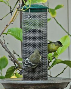 How to attract birds to your garden.