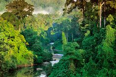 river in danum valley (a tropical rainforest), borneo, by #frans_lanting