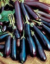 HEIRLOOM Non GMO EGGPLANT LONG PURPLE 250 SEEDS Productive Fruits Vegetables