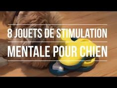Stimulation mentale pour chien: 8 jouets à découvrir ! - YouTube Le Kong, Education Canine, Border Collie, Shih Tzu, Dog Training, Dressage, Dogs, Animals, Boxers