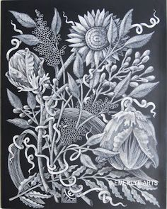 I need a Title - scratchboard v 7 Black White Art, Black N White Images, Scratchboard Art, Scratch Art, Drawing Ideas, Printmaking, Art Ideas, Coloring, Doodles