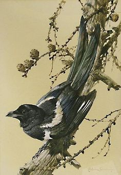 Buy online, view images and see past prices for Edwin Penny (British, born Magpie in a pine tree. Invaluable is the world's largest marketplace for art, antiques, and collectibles. Exotic Birds, Wildlife Art, Bird Art, Animals And Pets, Watercolor, Antiques, Illustration, Artist, Pictures