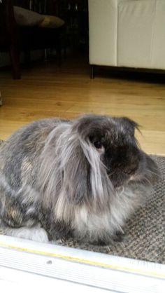 my rabbit gizmo (^_-)