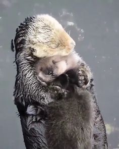 Animal Planet - It's all about true love. - Animal Planet - It's all about true love. Cute Little Animals, Cute Funny Animals, Cute Dogs, Mother And Baby Animals, Cute Animal Videos, Cute Animal Pictures, Otters Cute, Otters Funny, Tier Fotos