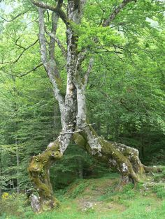Arbre au lac de Bethmale. France, Weird And Wonderful, Natural, Plants, Ride Or Die, Landscapes, Plant, French Resources, Planting