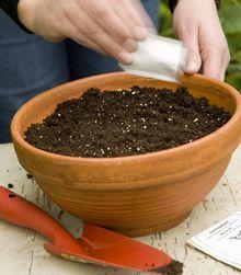 Taimien kasvatus siemenistä – Kotiliesi