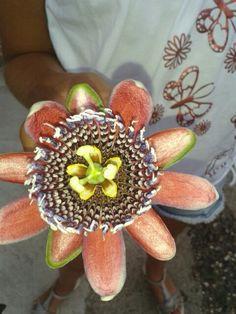 Che fiore è?