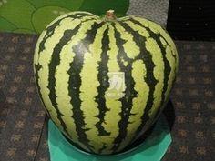 Heart-type watermelon