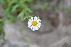 A Beautiful White-Yellow Flower