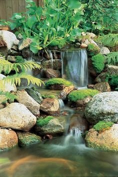 Aquascape Your Landscape: Waterfalls: The Perfect Abode for Moss
