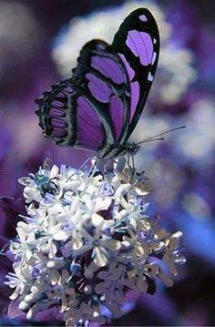 purple flower with butterfly