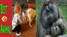 #funny #animals #pets Lustige Tiere scheitern! - VERSUCHEN SIE NICHT, HE... Funny Fails, Pets, Fun Nails, Funny Vidos, Cute Pets, Funny Animals, Challenges, Laughing, Animals And Pets