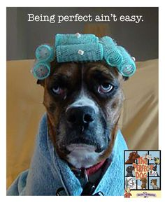 Dog Grooming Tips For New Dog Owners - Dogtime Funny Animal Pictures, Dog Pictures, Funny Animals, Cute Animals, Funniest Animals, Amazing Pictures, Boxer And Baby, Boxer Love, I Love Dogs