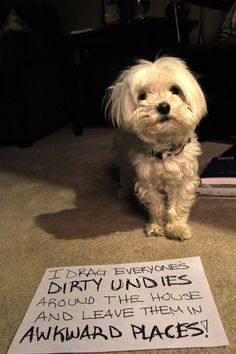 Dog Shaming features the most hilarious, most shameful, and never-before-seen doggie misdeeds. Join us by sharing in the shaming and laughing as Dog Shaming reminds us that unconditional love goes both ways. Funny Animal Quotes, Dog Quotes, Funny Animals, Cute Animals, Animal Funnies, Hilarious Sayings, Funny Memes, 9gag Funny, Animals Dog