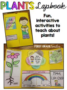 Plants lapbook - parts of a plant, plant life cycle, and more!  Fun and interactive activities!