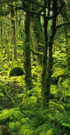 Hobbit Country, Fiordland, New Zealand