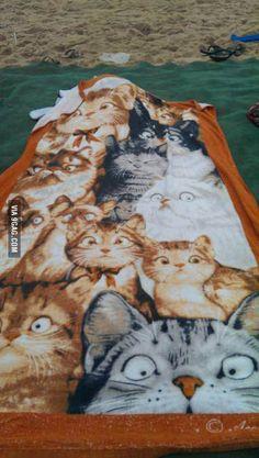 Koci ręcznik