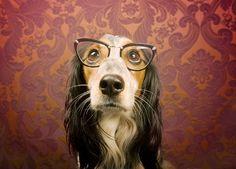 Comment savoir si la vue de votre animal se détériore, et que faire si c'est le cas?