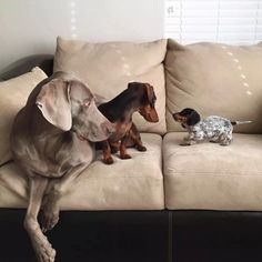 Harlow & Sage (and Indiana)...