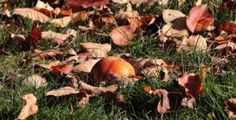 n You'll want to read these fall tips to deer from landscapes. Diy Garden Fence, Backyard Fences, Lawn And Garden, Garden Tips, Winter Plants, Summer Plants, Tree Support, Evergreen Hedge, Deer Fence