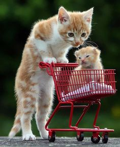 Pin By Nicole Cook On Baby Animals Pinterest Baby Animals And - 30 cutest pictures ever babies posing animals