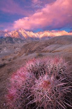 California: Barrel Cactus in the Alabama Hills, Sierra Range | Photo It's a Girl! by Ted Gore on 500px