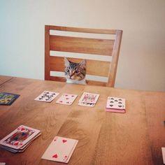 【画像】 ギャンブラーな猫〓 ねこメモ 〓