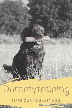 Dummytraining mit deinem Hund - ein Guide