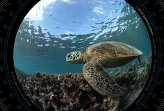 Lady Elliot Island   The #Catlin #Seaview Survey - www.catlinseaviewsurvey.com/