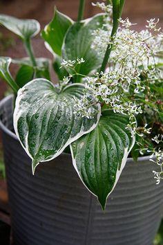 Garden Plants, Plant Leaves, Landscape, Garden Ideas, Heaven, Gardening, Scenery, Sky, Heavens