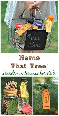 fun tree identification project for kids! Includes free printable tree tags & leaf/seed identification sheets too!Super fun tree identification project for kids! Includes free printable tree tags & leaf/seed identification sheets too! Forest School Activities, Nature Activities, Science Activities, Science Nature, Activities For Kids, Science Experiments, Educational Activities, Kids Nature Crafts, Science Inquiry