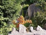 Diverse fotografii de la vizitatori Accounting, Plants, Plant, Planets