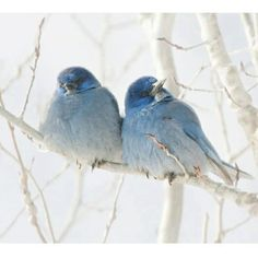 this would make a great painting... love birds for valentines day?